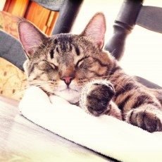Cat napping-Your Pets List article on Litter box issues